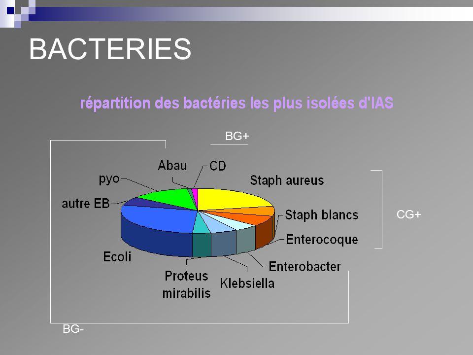 BACTERIES CG+ BG- BG+