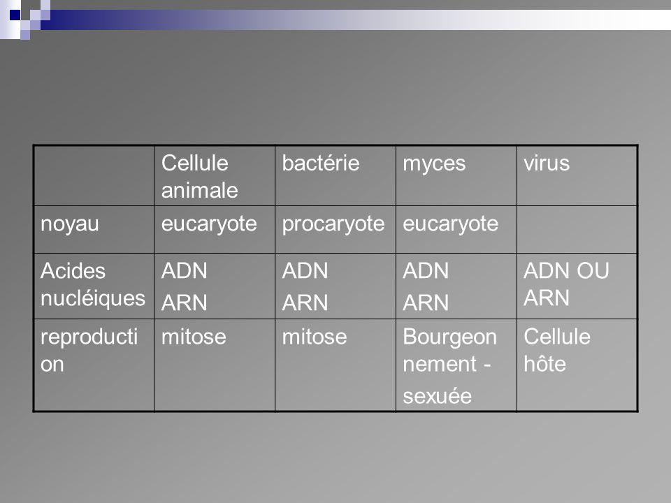 Cellule animale bactériemycesvirus noyaueucaryoteprocaryoteeucaryote Acides nucléiques ADN ARN ADN ARN ADN ARN ADN OU ARN reproducti on mitose Bourgeo