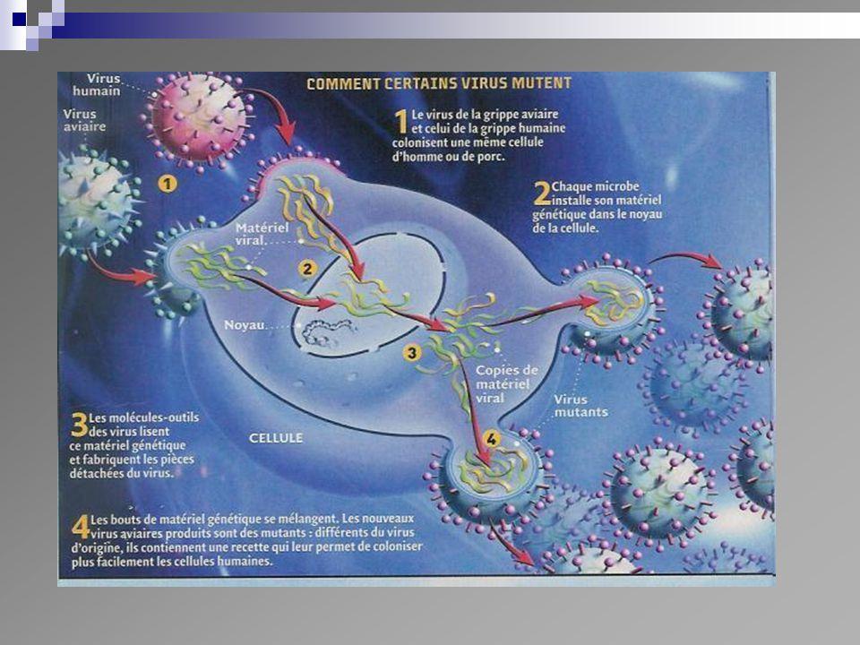Cocci à Gram + Staphylocoques Aureus Epidermidis Autre Staph blanc Streptocoques Strepto A Strepto B Pneumocoque Autre Strepto Enterocoque