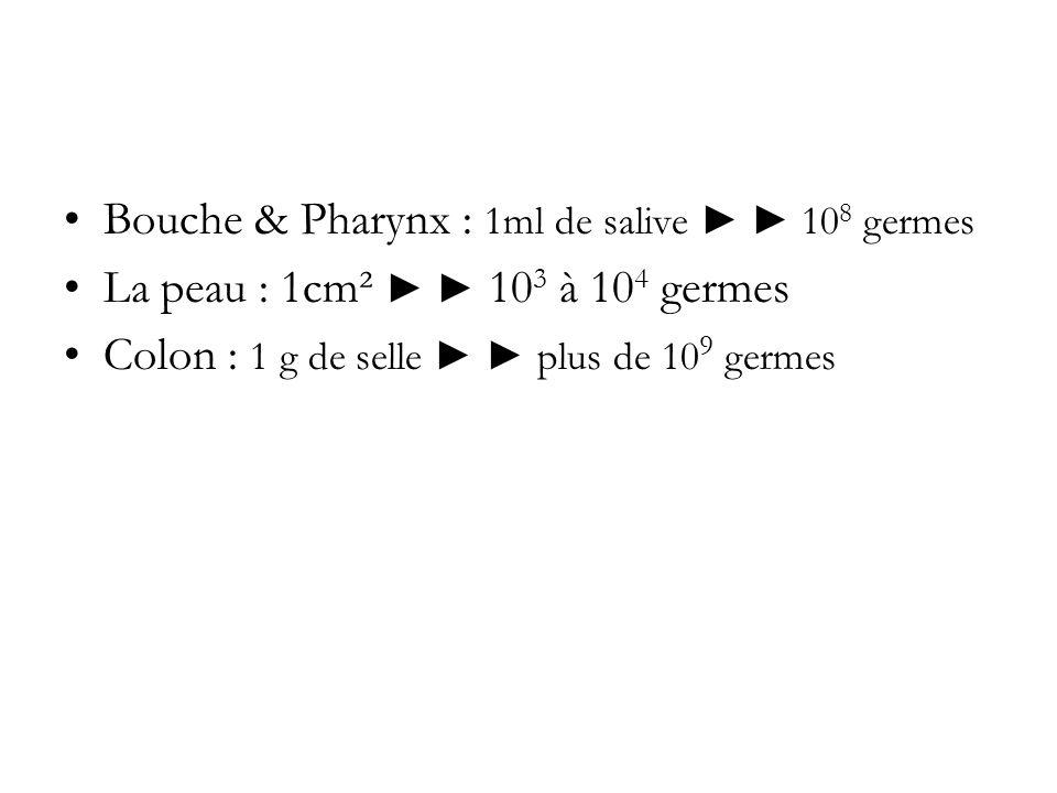 Bouche & Pharynx : 1ml de salive 10 8 germes La peau : 1cm² 10 3 à 10 4 germes Colon : 1 g de selle plus de 10 9 germes