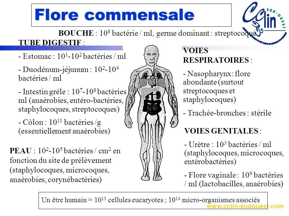 www.cclin-sudouest.com Flore commensale BOUCHE : 10 8 bactérie / ml, germe dominant : streptocoque TUBE DIGESTIF : - Estomac : 10 1 -10 2 bactéries / ml - Duodénum-jéjunum : 10 2 -10 4 bactéries / ml - Intestin grêle : 10 7 -10 8 bactéries / ml (anaérobies, entéro-bactéries, staphylocoques, streptocoques) - Côlon : 10 11 bactéries /g (essentiellement anaérobies) VOIES RESPIRATOIRES : - Nasopharynx: flore abondante (surtout streptocoques et staphylocoques) - Trachée-bronches : stérile VOIES GENITALES : - Urètre : 10 3 bactéries / ml (staphylocoques, microcoques, entérobactéries) - Flore vaginale : 10 9 bactéries / ml (lactobacilles, anaérobies) PEAU : 10 2 -10 5 bactéries / cm 2 en fonction du site de prélèvement (staphylocoques, microcoques, anaérobies, corynébactéries) Un être humain = 10 13 cellules eucaryotes ; 10 14 micro-organismes associés