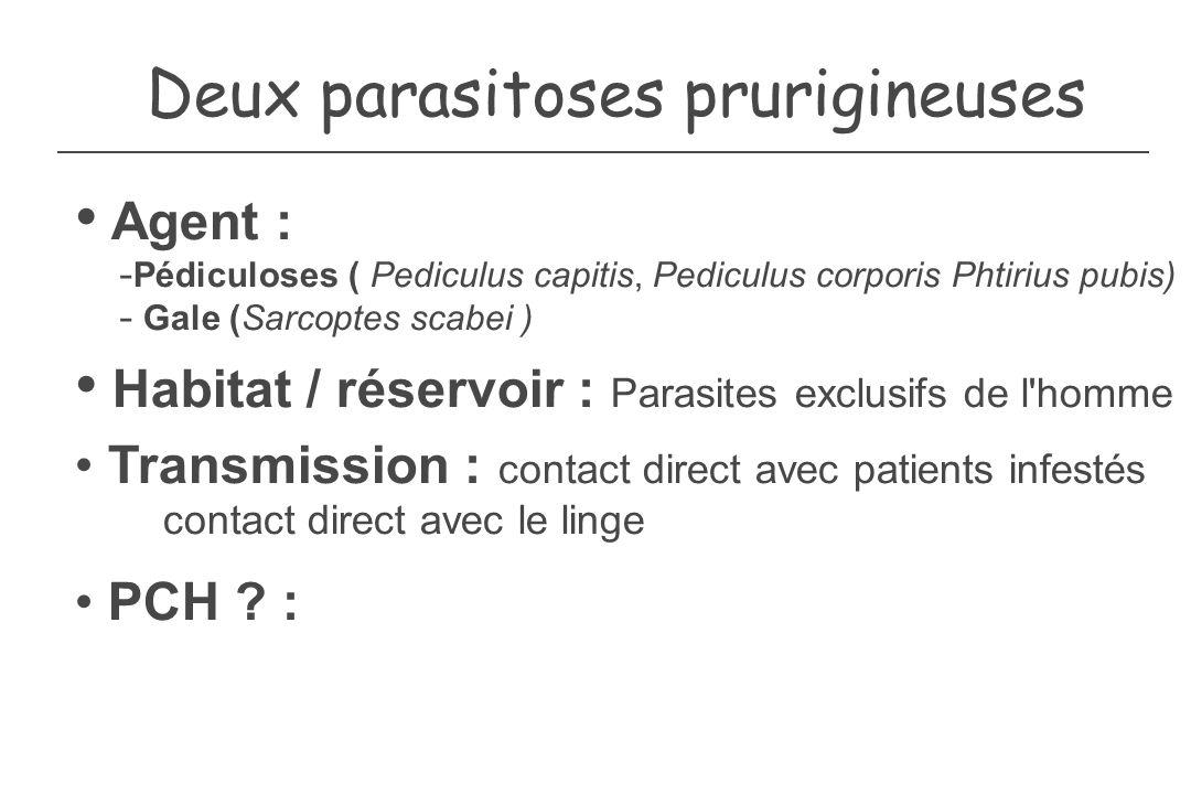 Deux parasitoses prurigineuses Agent : - Pédiculoses ( Pediculus capitis, Pediculus corporis Phtirius pubis) - Gale (Sarcoptes scabei ) Habitat / rése