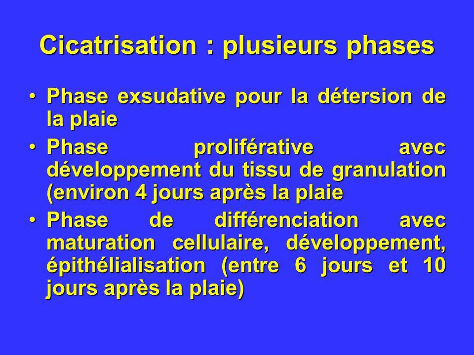 Cicatrisation : plusieurs phases Phase exsudative pour la détersion de la plaiePhase exsudative pour la détersion de la plaie Phase proliférative avec