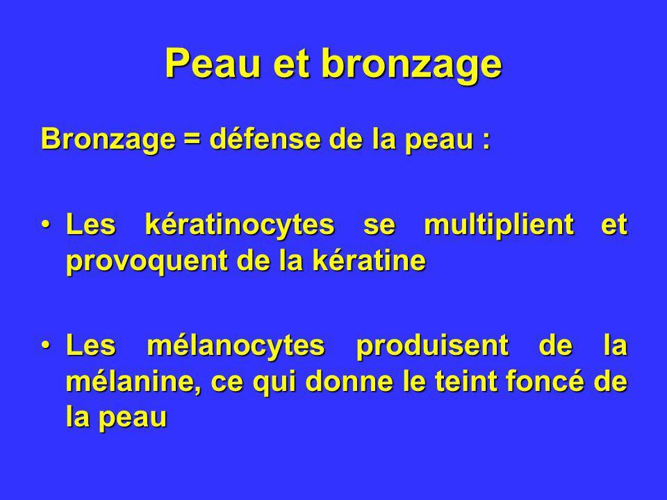 Peau et bronzage Bronzage = défense de la peau : Les kératinocytes se multiplient et provoquent de la kératineLes kératinocytes se multiplient et prov