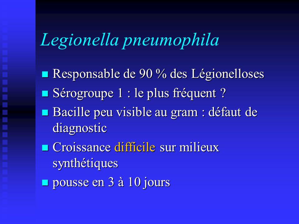 Legionella pneumophila Responsable de 90 % des Légionelloses Responsable de 90 % des Légionelloses Sérogroupe 1 : le plus fréquent .