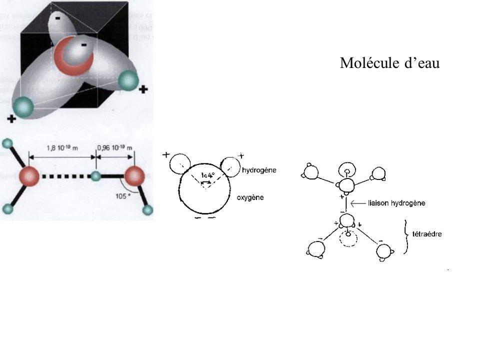 Molécule deau