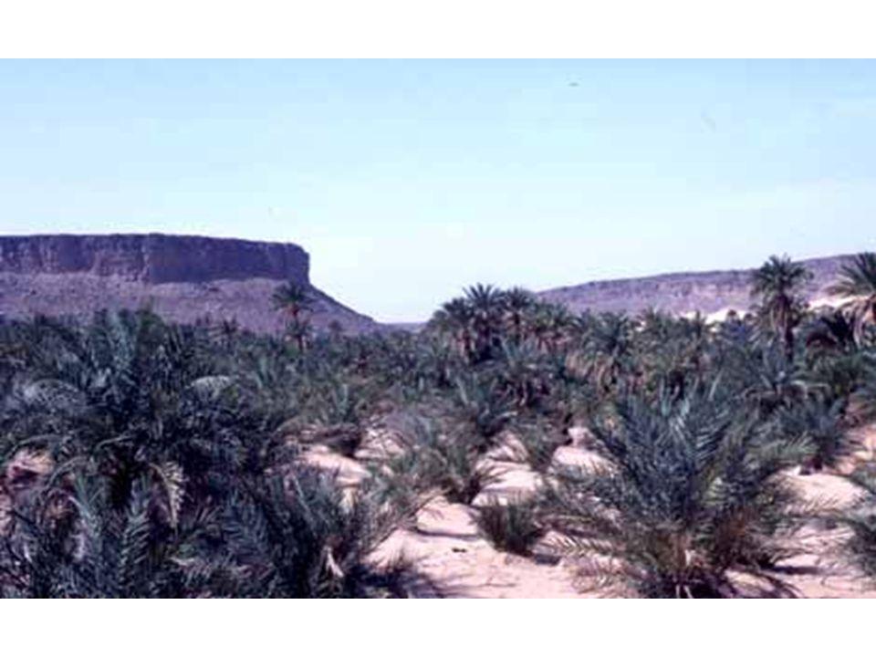 Mesa, haute corniche et son talus, Mauritanie