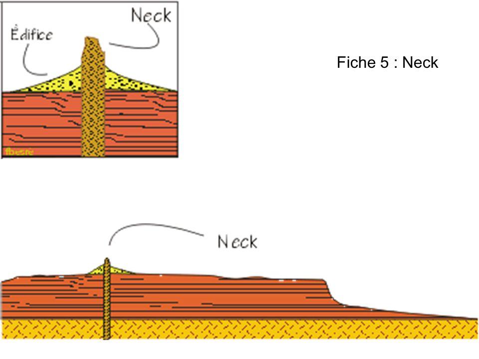 Fiche 5 : Neck