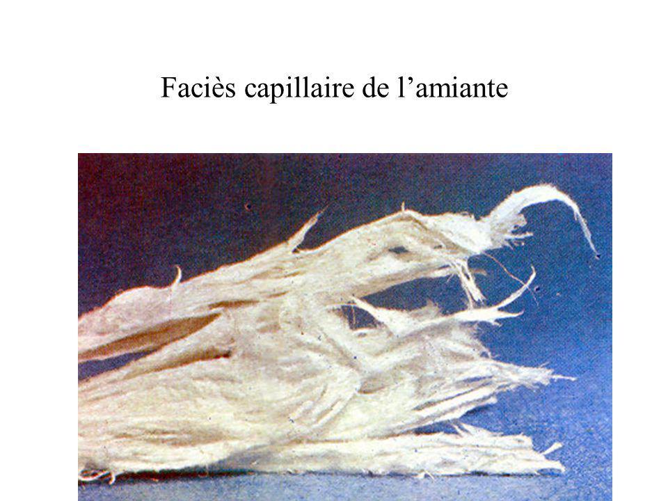 Faciès capillaire de lamiante