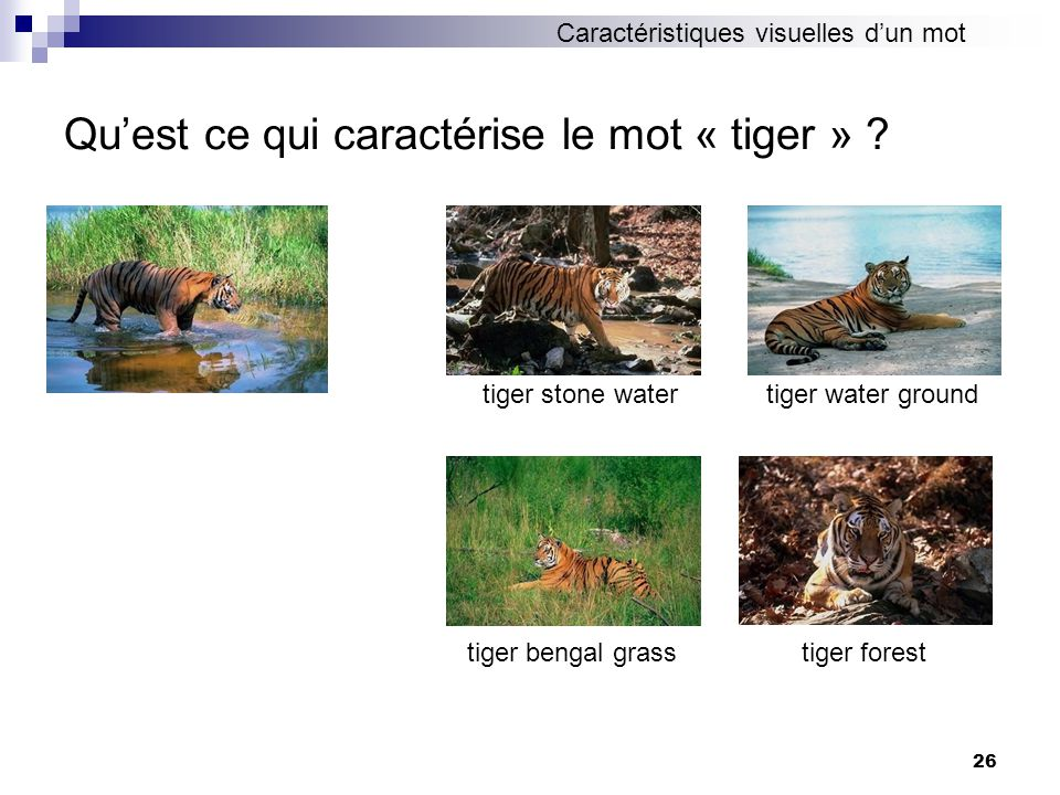 26 Quest ce qui caractérise le mot « tiger » ? tiger stone water tiger bengal grasstiger forest tiger water ground Caractéristiques visuelles dun mot