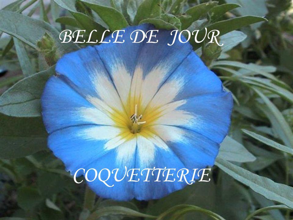 BELLE DE JOUR COQUETTERIE
