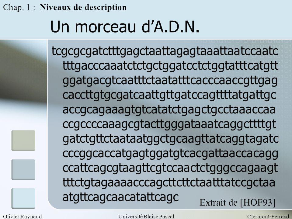 Olivier RaynaudUniversité Blaise PascalClermont-Ferrand Un morceau dA.D.N. tcgcgcgatctttgagctaattagagtaaattaatccaatc tttgacccaaatctctgctggatcctctggtat
