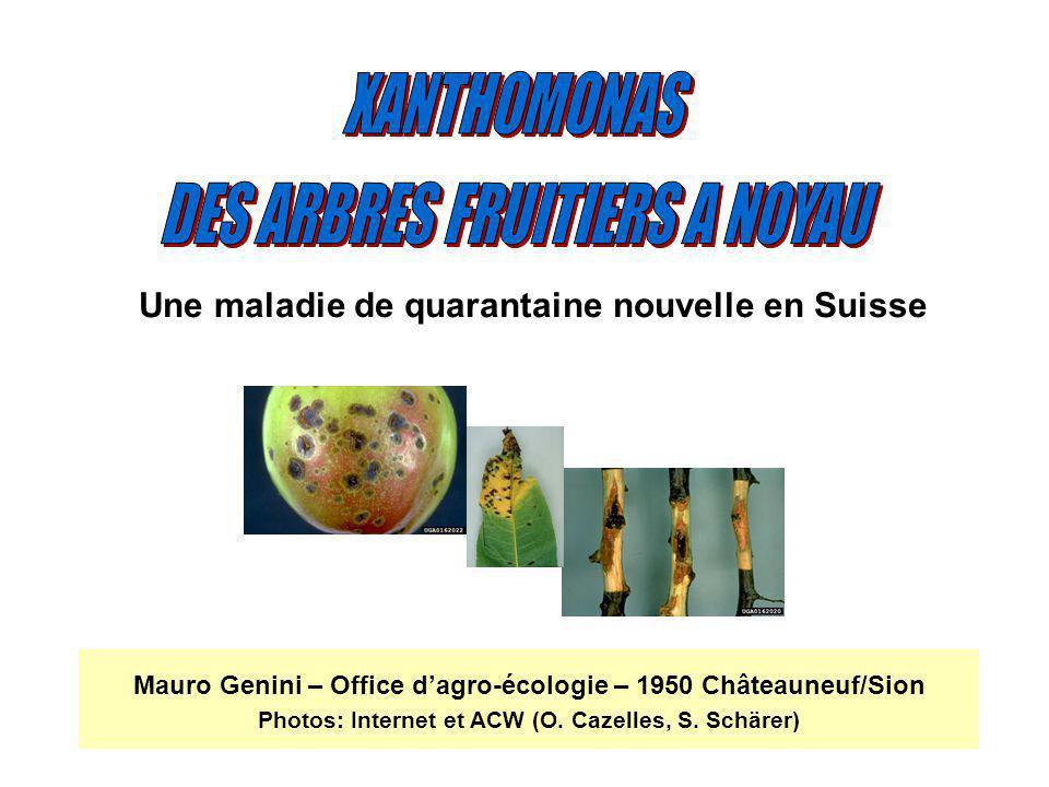 Mauro Genini – Office dagro-écologie – 1950 Châteauneuf/Sion Photos: Internet et ACW (O. Cazelles, S. Schärer) Une maladie de quarantaine nouvelle en