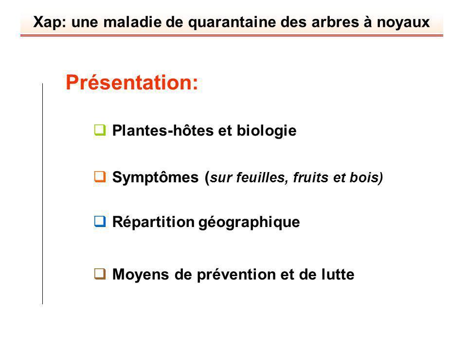 Xap: une maladie de quarantaine des arbres à noyaux Présentation: Plantes-hôtes et biologie Symptômes ( sur feuilles, fruits et bois) Répartition géog