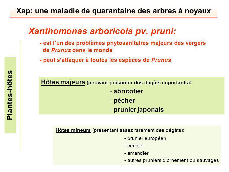 Xap: une maladie de quarantaine des arbres à noyaux Xanthomonas arboricola pv. pruni: - est lun des problèmes phytosanitaires majeurs des vergers de P