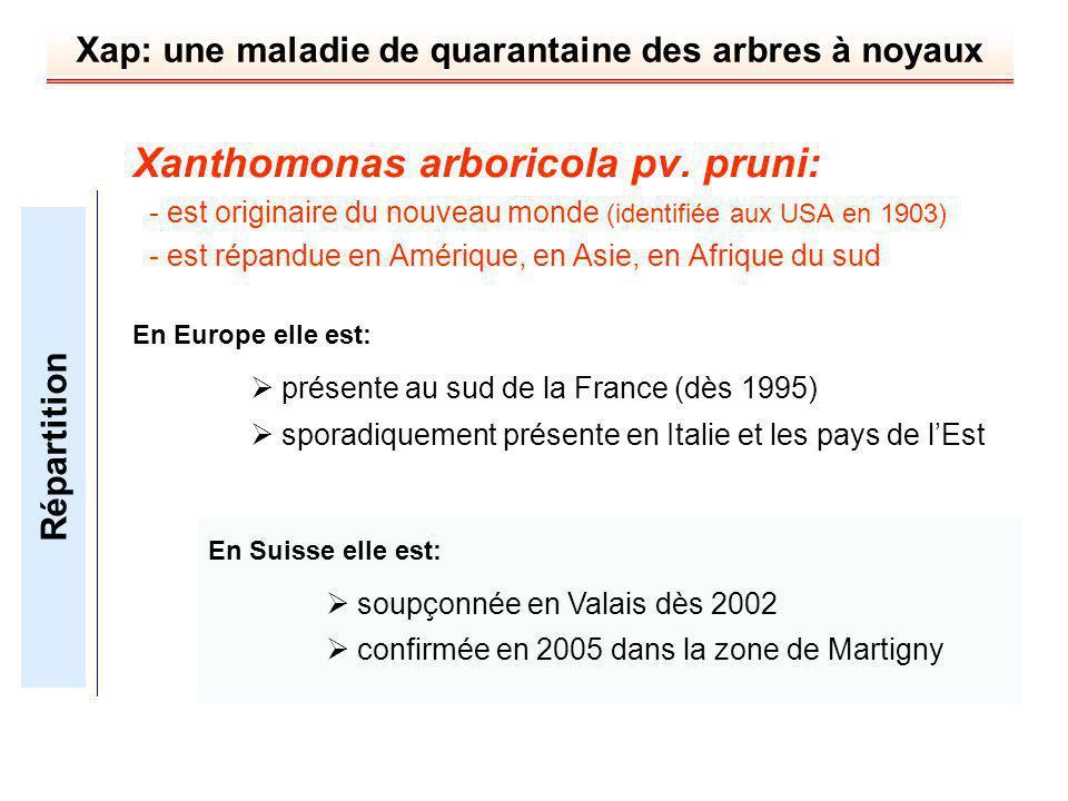 Xap: une maladie de quarantaine des arbres à noyaux Xanthomonas arboricola pv. pruni: - est originaire du nouveau monde (identifiée aux USA en 1903) -