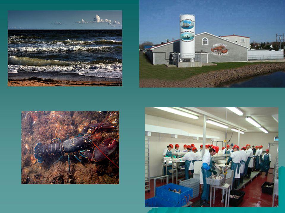 Ressources Produits venant de la mer (poissons, crustacés…) Produits venant de la mer (poissons, crustacés…)