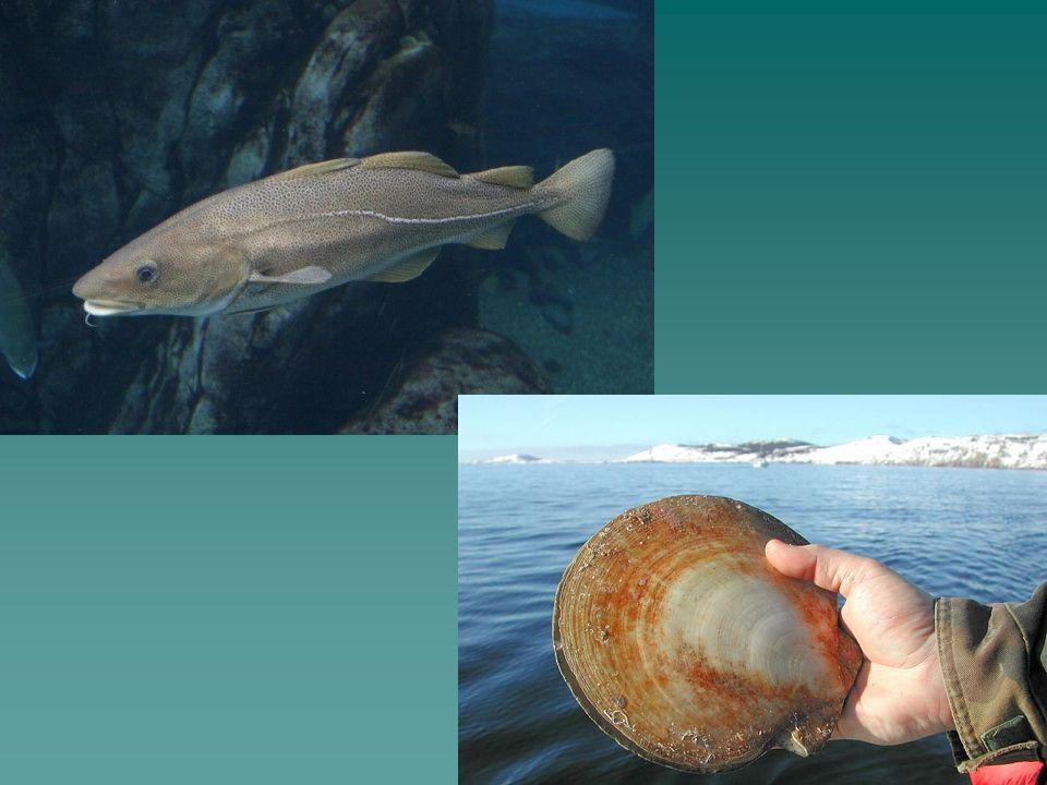 Moratoire Accorder un délai par rapport à la pêche. Accorder un délai par rapport à la pêche.