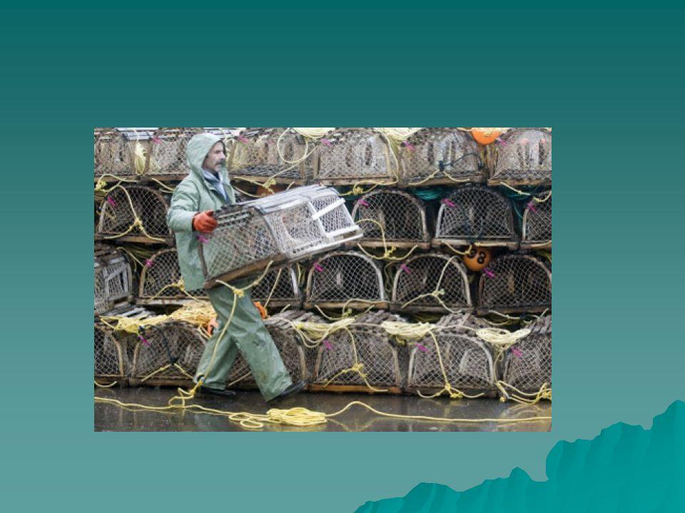 Commercialisation Mettre les produits de la mer à vendre Mettre les produits de la mer à vendre