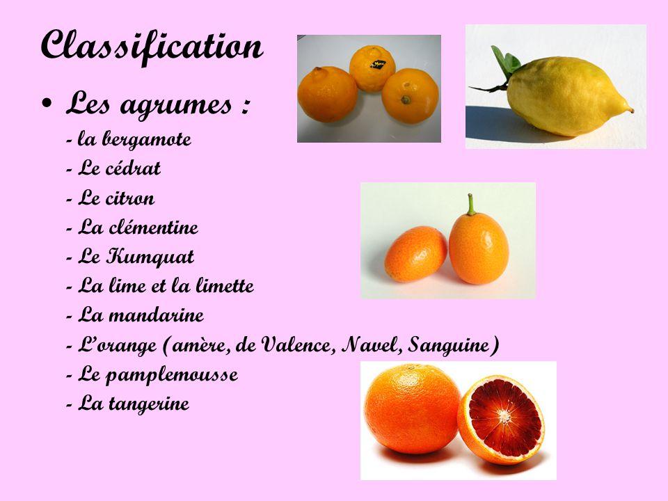 Classification Les agrumes : - la bergamote - Le cédrat - Le citron - La clémentine - Le Kumquat - La lime et la limette - La mandarine - Lorange (amè