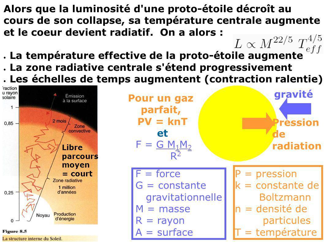 Alors que la luminosité d'une proto-étoile décroît au cours de son collapse, sa température centrale augmente et le coeur devient radiatif. On a alors