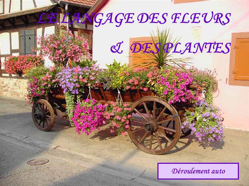 LE LANGAGE DES FLEURS & DES PLANTES Déroulement auto