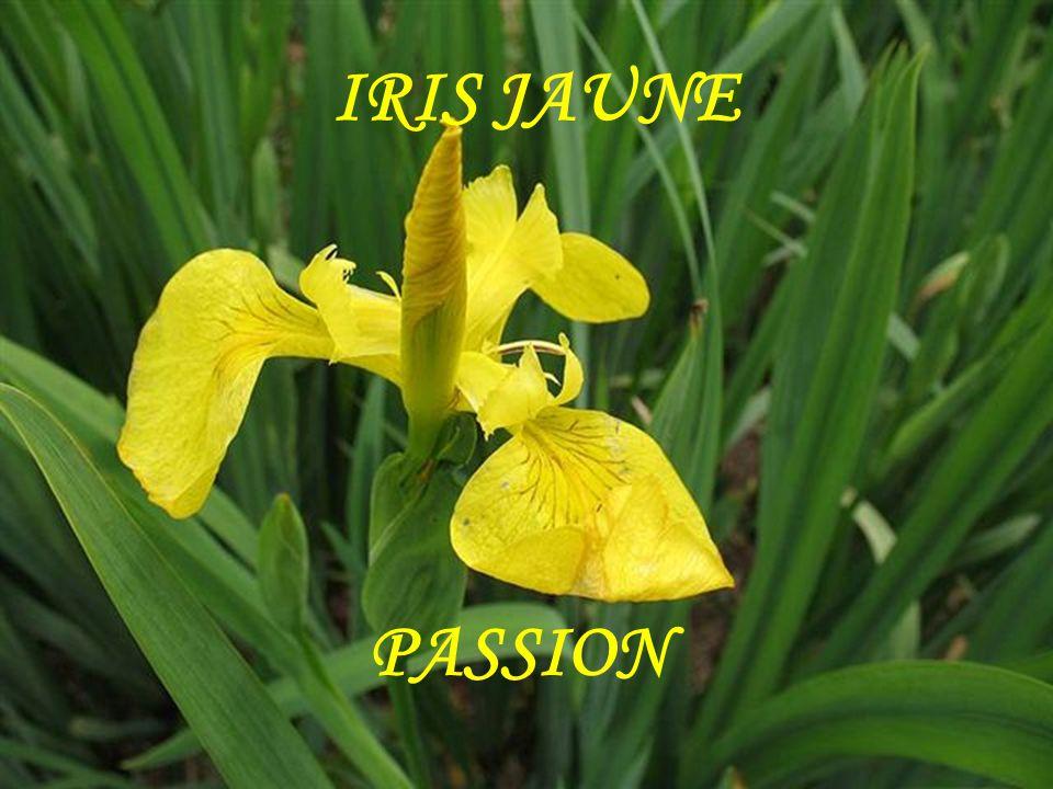 IRIS MESSAGE