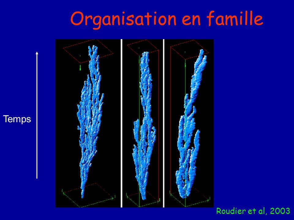 Organisation en famille Roudier et al, 2003 Temps