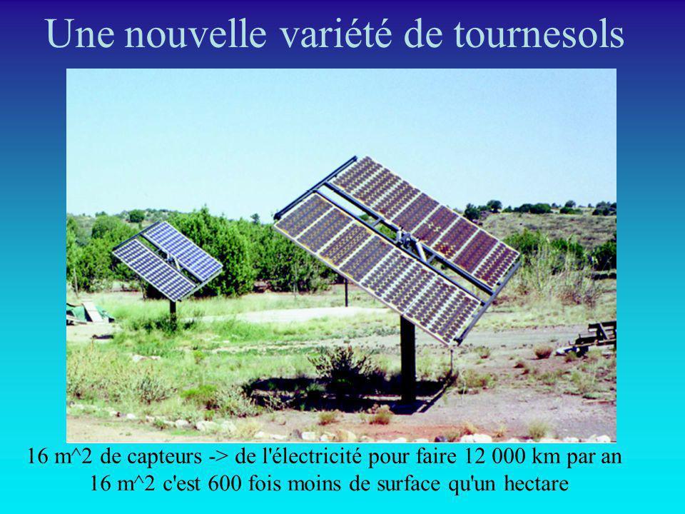 Une nouvelle variété de tournesols 16 m^2 de capteurs -> de l'électricité pour faire 12 000 km par an 16 m^2 c'est 600 fois moins de surface qu'un hec