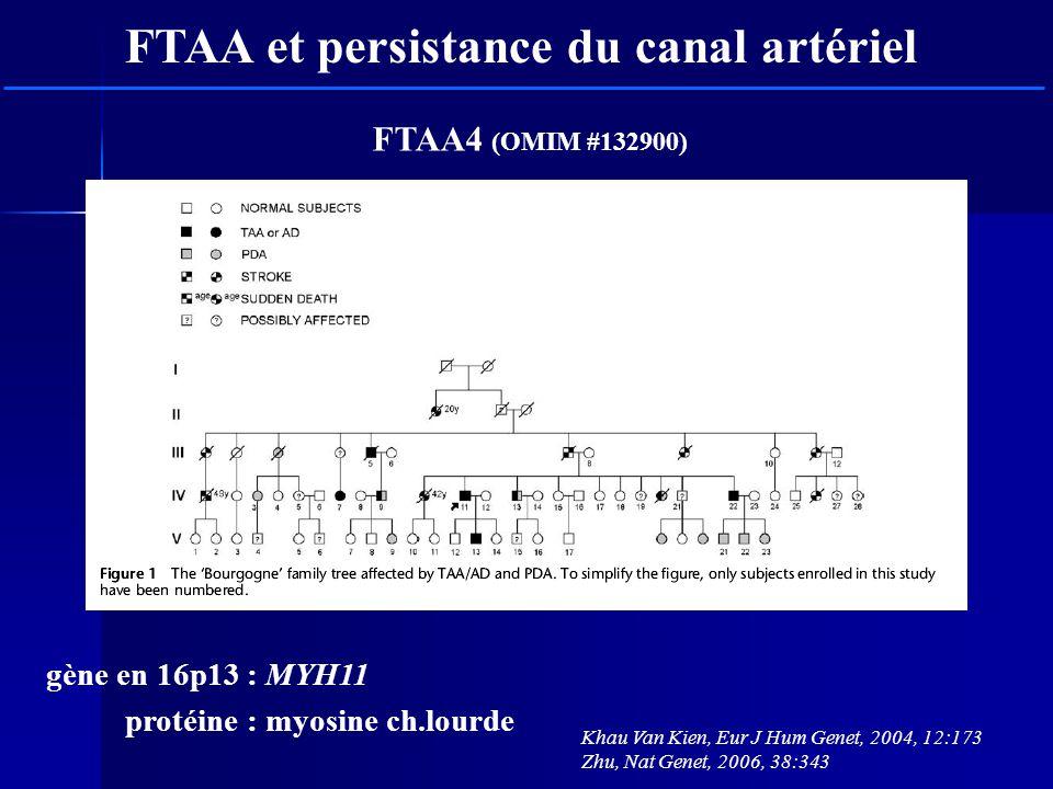 Khau Van Kien, Eur J Hum Genet, 2004, 12:173 Zhu, Nat Genet, 2006, 38:343 FTAA et persistance du canal artériel gène en 16p13 : MYH11 protéine : myosi