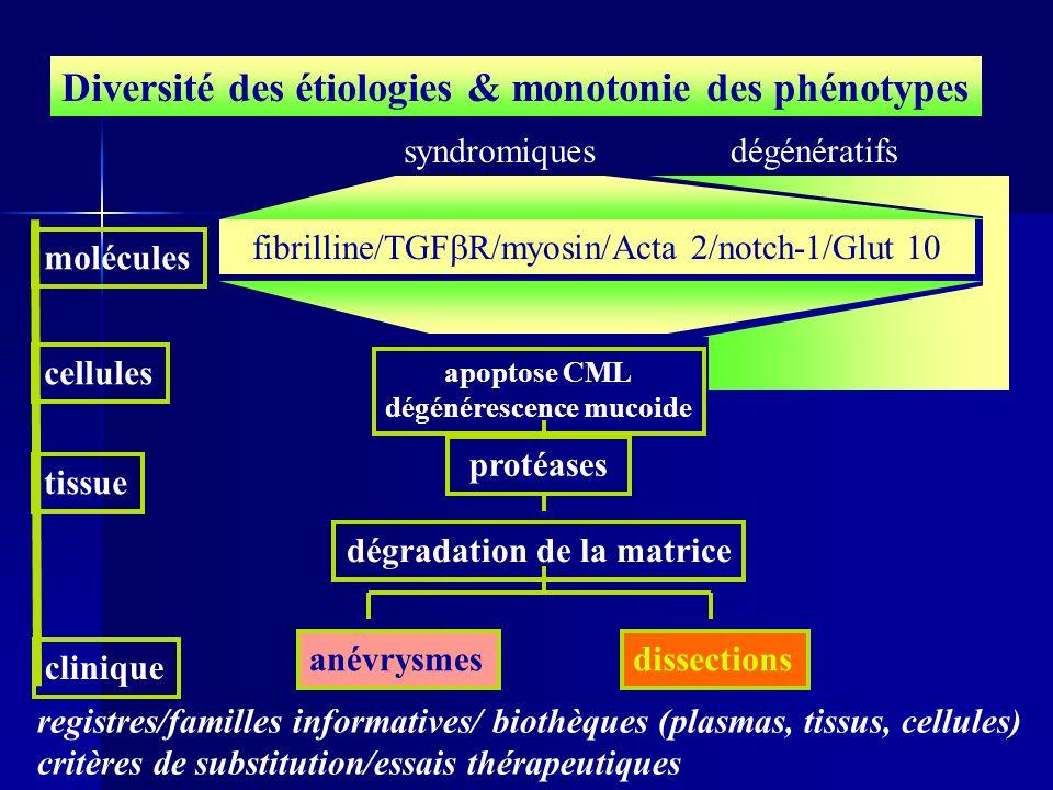 Diversité des étiologies & monotonie des phénotypes molécules apoptose CML dégénérescence mucoide cellules tissue dégradation de la matrice clinique a