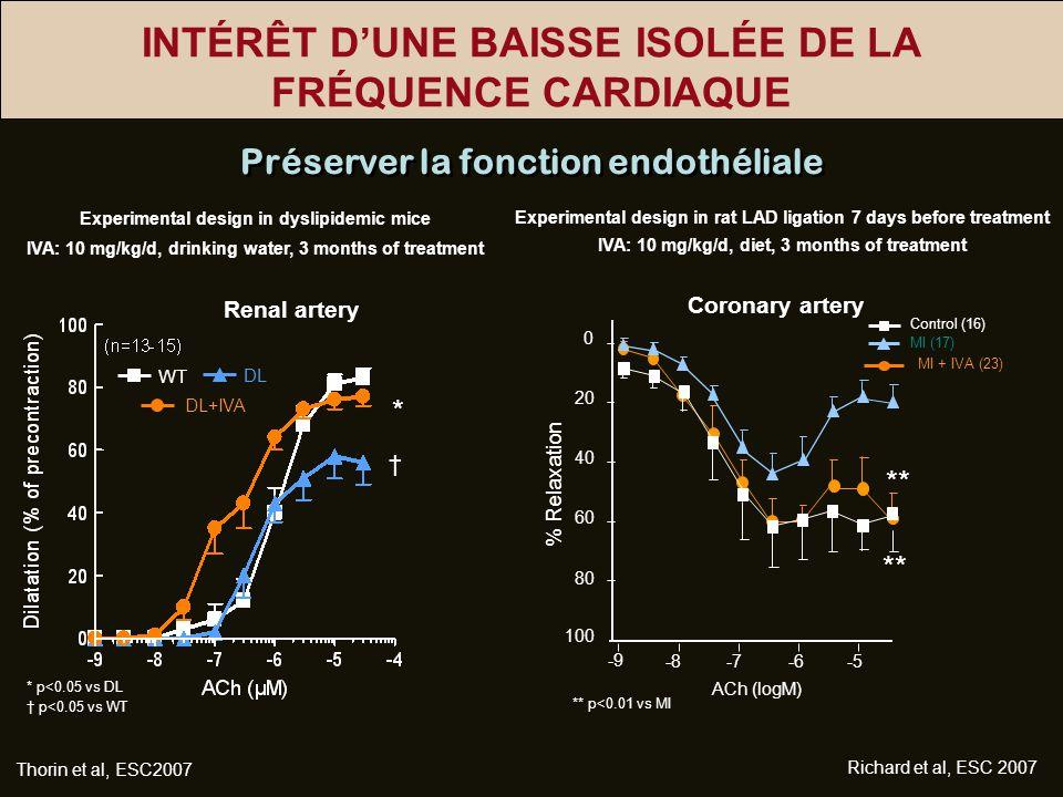 INTÉRÊT DUNE BAISSE ISOLÉE DE LA FRÉQUENCE CARDIAQUE Renal artery * Thorin et al, ESC2007 DL DL+IVA WT * p<0.05 vs DL p<0.05 vs WT Préserver la foncti