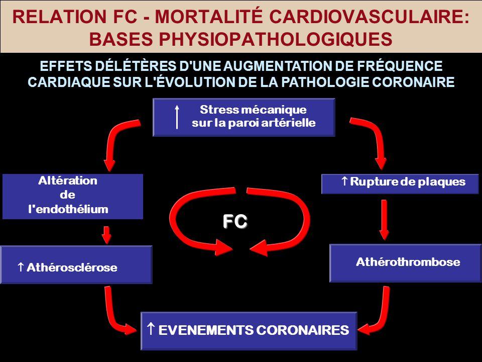 RELATION FC - MORTALITÉ CARDIOVASCULAIRE: BASES PHYSIOPATHOLOGIQUES EVENEMENTS CORONAIRES Altération de l'endothélium Rupture de plaques Athéroscléros