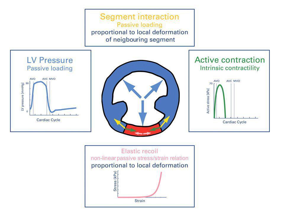 Radial = L+SAX 2D, Visual assessment M Mode 2D Strain Longitudinal = APICAL 2D, Visual assessment TDI M-Mode 2D Strain Atrio-ventricular Dyssynchrony Inter-ventricular Dyssynchrony Intra-ventricular Dyssynchrony Multiparametric Algorithm Lafitte, Habib, Donal.