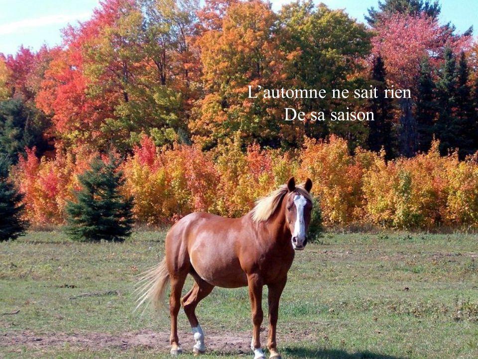 Lautomne ne sait rien De sa saison