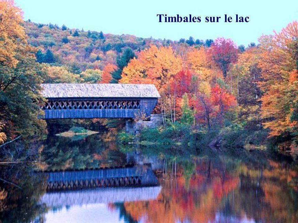 Timbales sur le lac