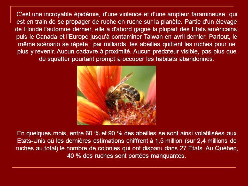 Les abeilles s éteignent par milliards depuis quelques mois.
