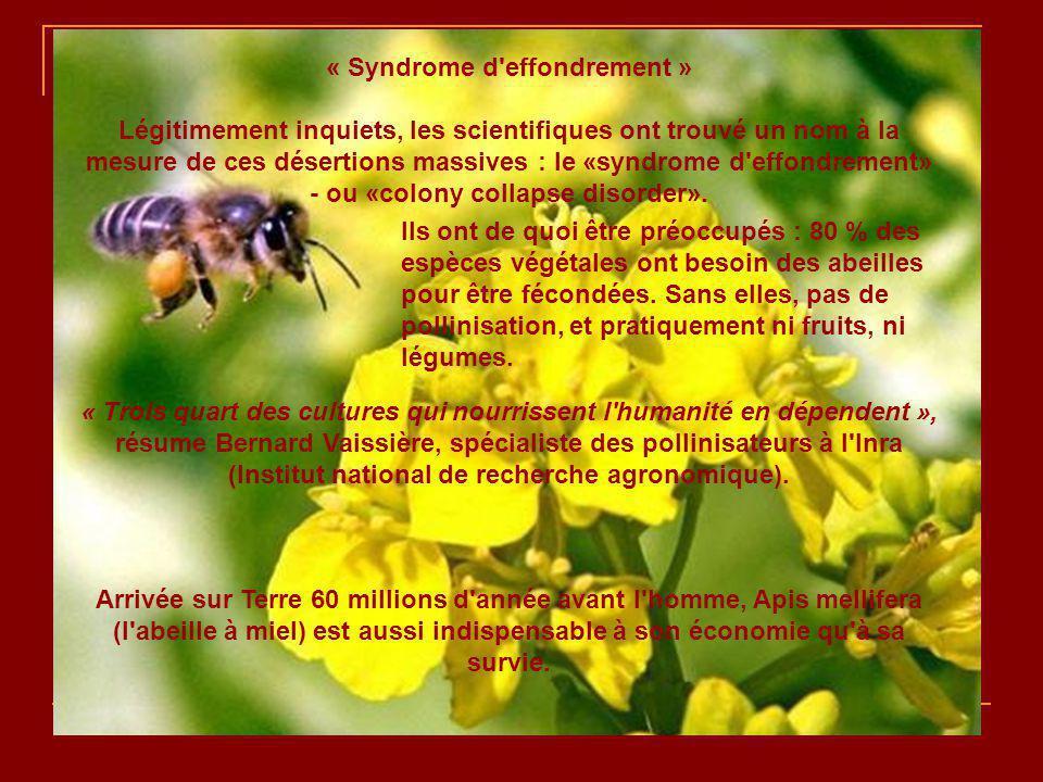 En Allemagne, selon l association nationale des apiculteurs, le quart des colonies a été décimé avec des pertes jusqu à 80 % dans certains élevages.