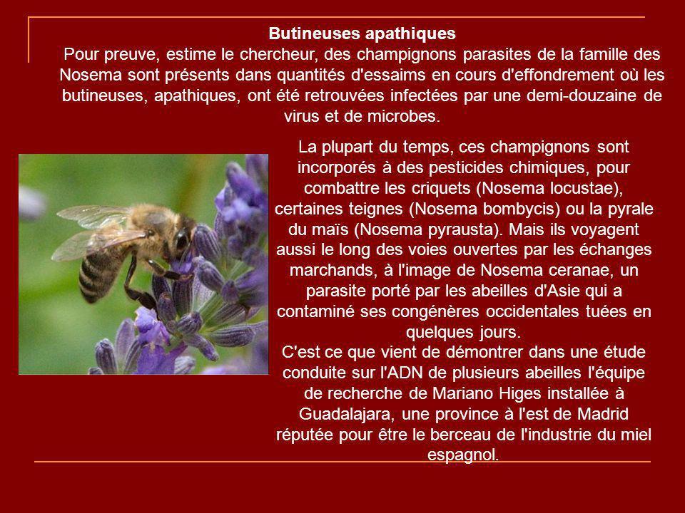 Pour éviter les épandages incontrôlables, les nouvelles générations d insecticides enrobent les semences pour pénétrer de façon systémique dans toute la plante, jusqu au pollen que les abeilles rapportent à la ruche, qu elles empoisonnent.