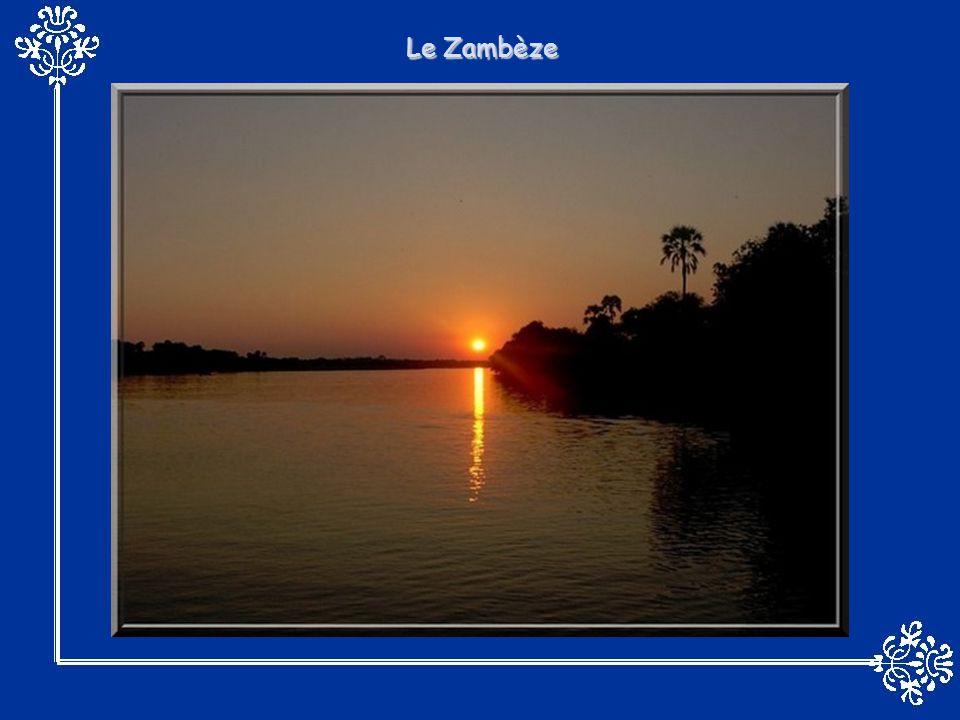LOkavango, ( le fleuve qui ne trouve jamais la mer ), suite à un accident géologique, se perd dans le sec désert du Kalahari au lieu d aboutir dans l Océan Indien.