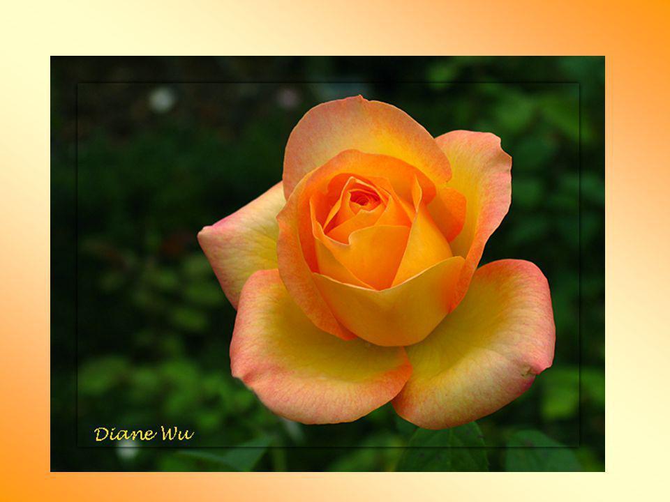 Quelques personnes ne voient pas la rose à l'intérieur d'elles- mêmes, quelqu'un d'autre doit la leur montrer. Un des dons les plus extraordinaires qu