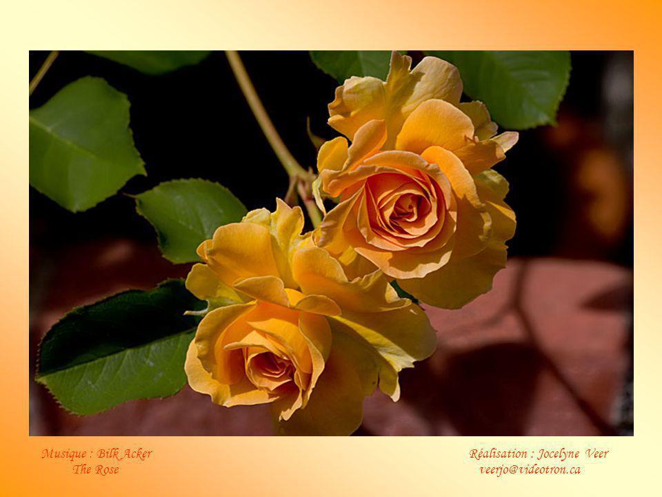 Notre devoir en ce monde est d'aider les autres en leur montrant leurs roses et non leurs épines. Alors seulement nous atteindrons l'amour que nous de