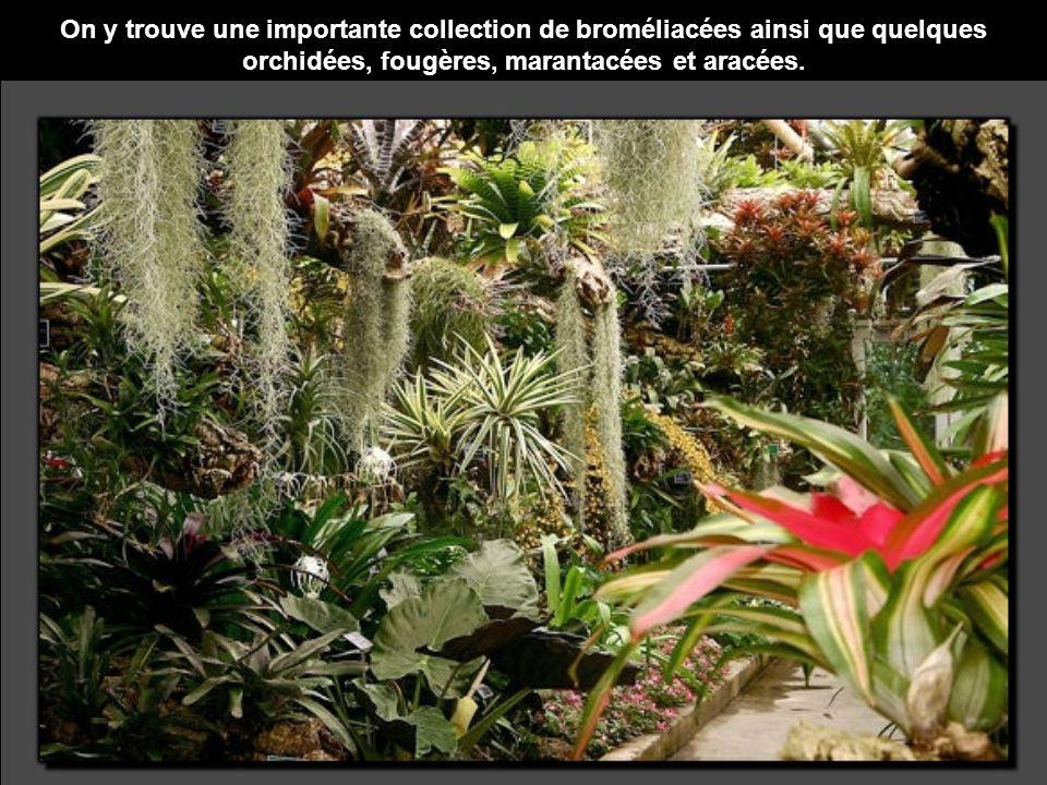 Ce diaporama fait partie de ceux que vous pourrez lire sur : Le Jardin secret de Tadine : http://www.tadine.ca/ http://www.tadine.ca/diaporama/diaporama01.shtml