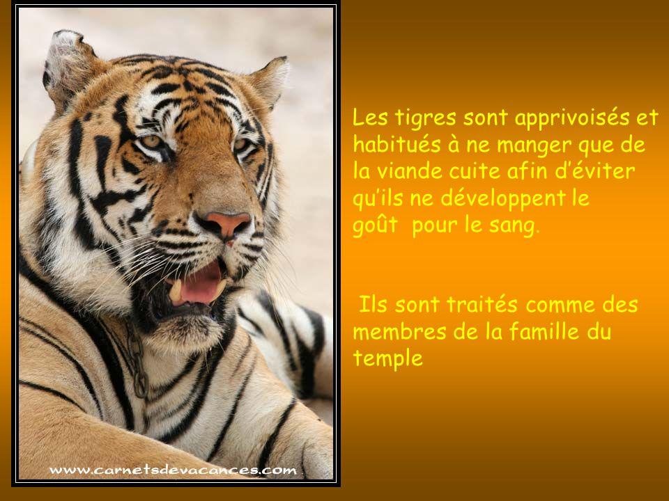 Les visiteurs sont invité à laisser un don si ils désirent être pris en photo avec les tigres