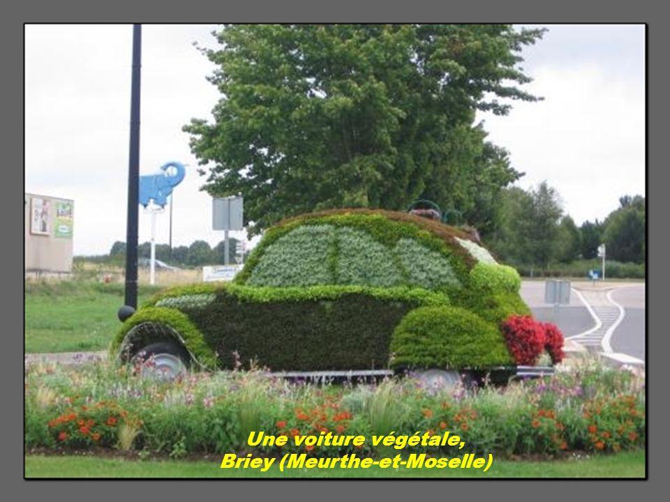 Une voiture végétale, Briey (Meurthe-et-Moselle)