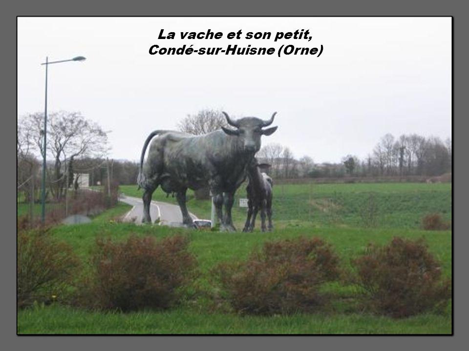 La vache et son petit, Condé-sur-Huisne (Orne)