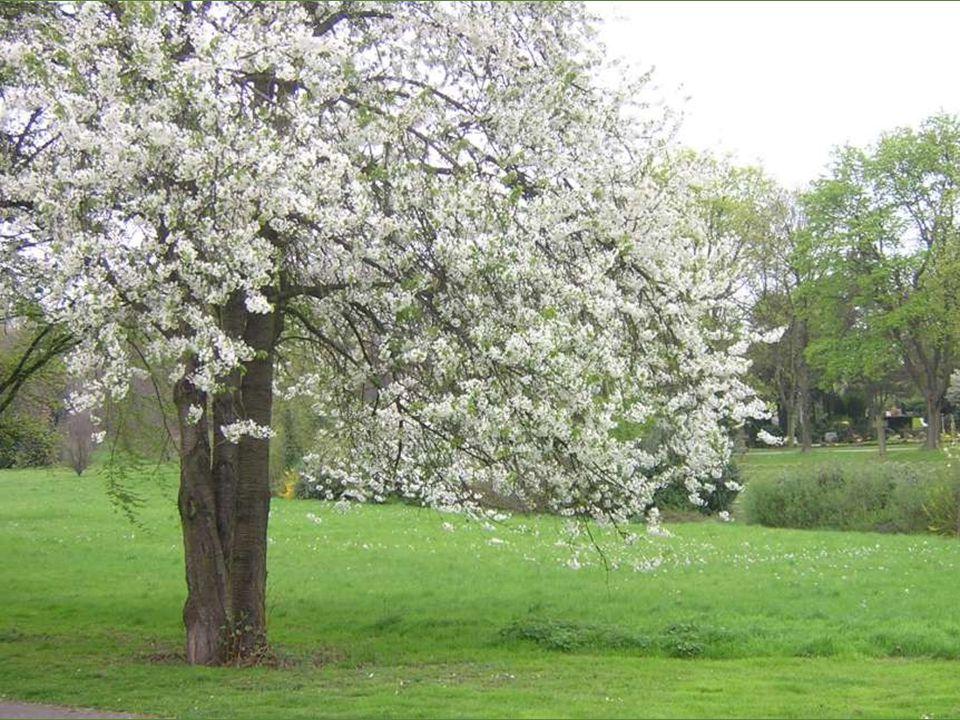 Soleil, enfin te voilà ! Comme il fait beau! Les bourgeons ouvrent leur manteau Pour nous offrir en cadeau Feuilles, fleurs et verdure. C'est le mirac