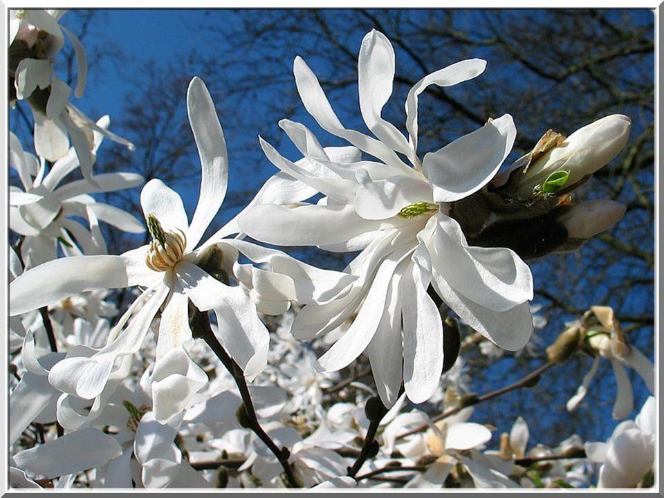 Le printemps au lac de Constance.