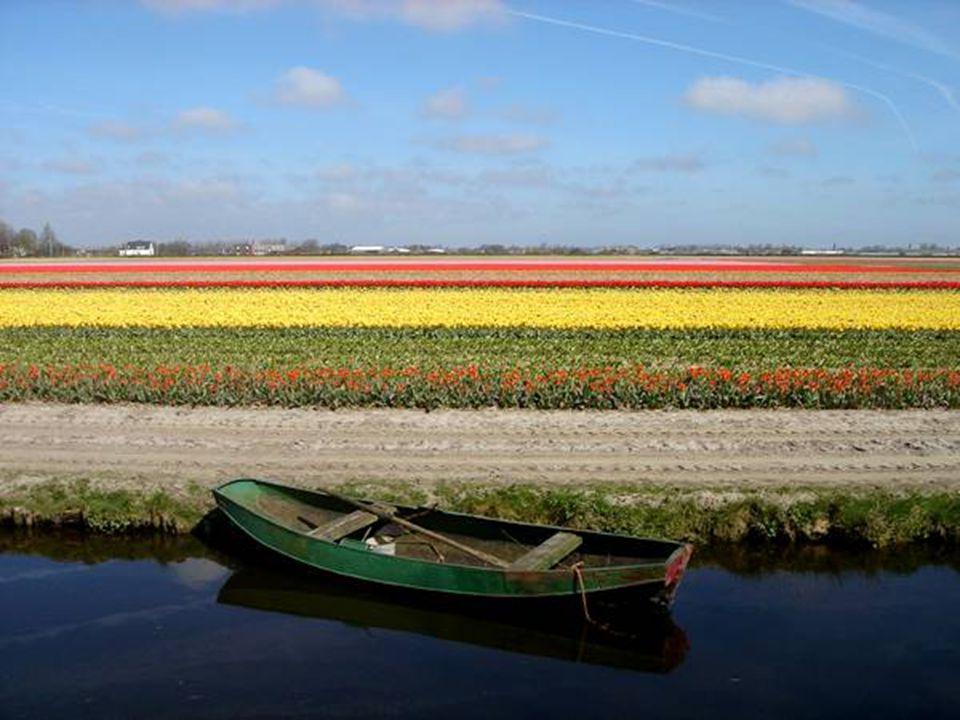 11. Keukenhof Gardens - Holland