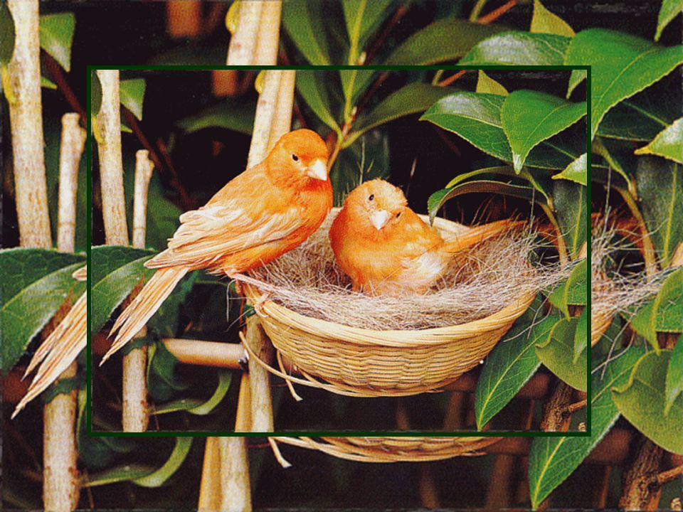 Bonjour petits oiseaux! Le matin, jaime vous entendre jaser très tôt Mésanges, merles, moineaux, tourterelles... Quel concert! Quels merveilleux batte